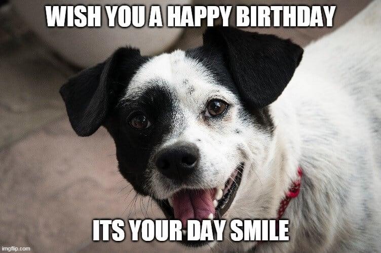 smile dog birthday meme