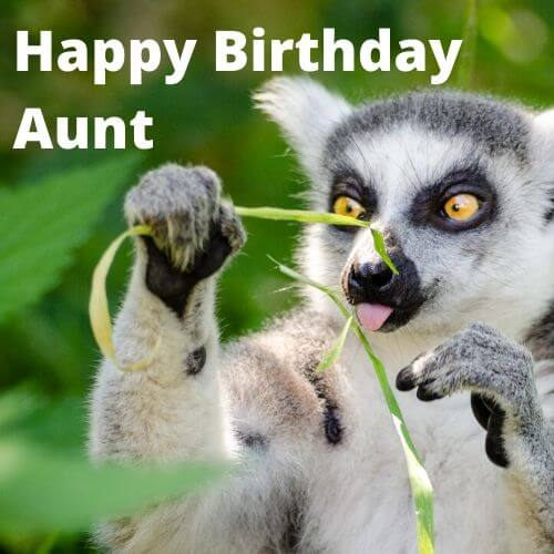 Happy Birthday Aunt funny meme