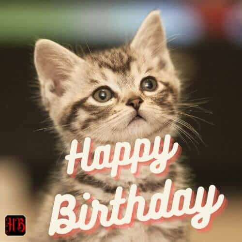 Happy Birthday Cat Kitty Furball Bday Wishes For Cat Lovers