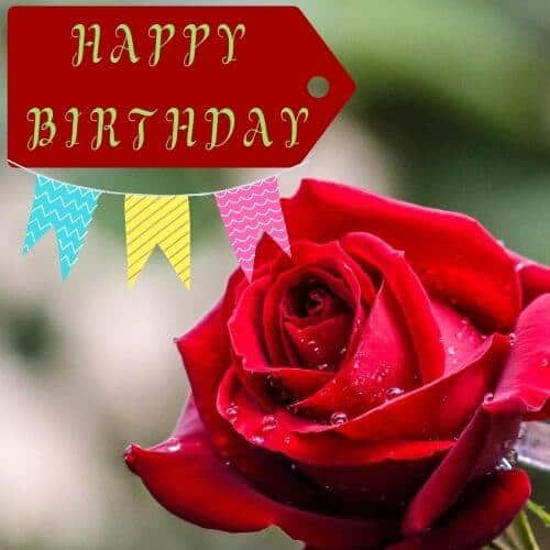 HAPPY BIRTHDAY wish with a dark red rose