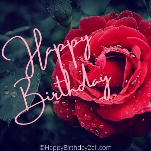 Happy Birthday ecard with red rose