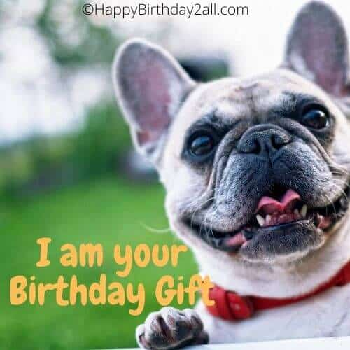 I am your Birthday Gift