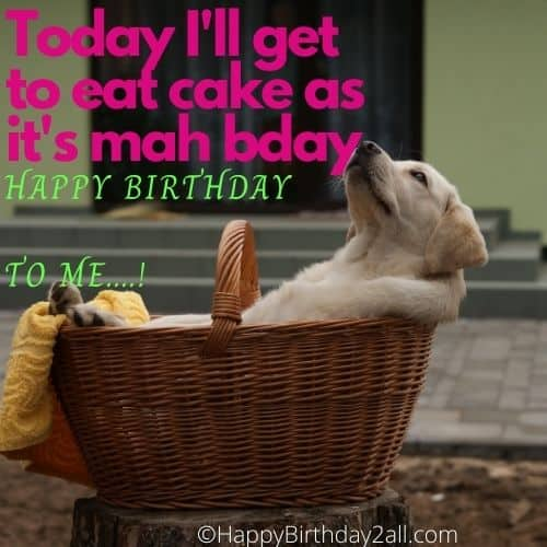 Today I'll get to eat cake as it's my bday puppy