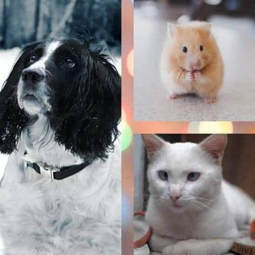 get a pet on your birthday